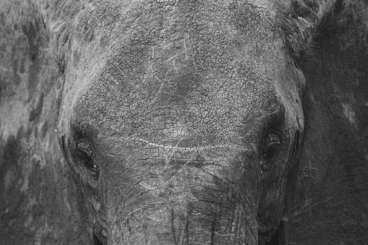 Africa 2014  0826