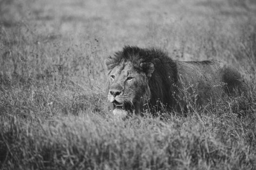Africa 2014  1954