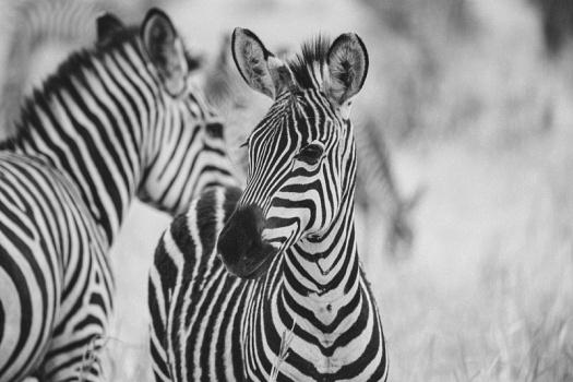 Africa 2014  0519