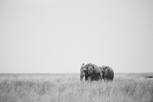 Africa 2014  2093