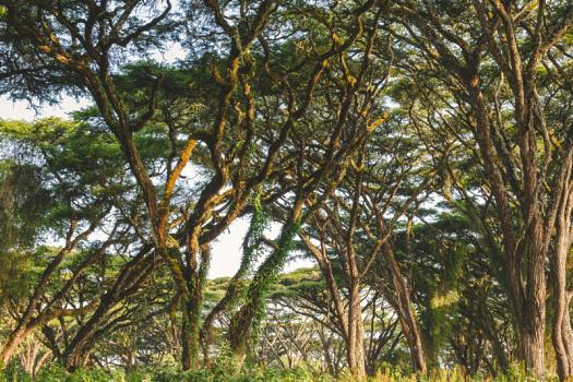Africa 2014  1141