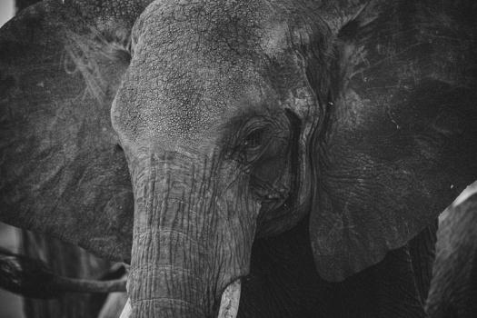 Africa 2014  0636