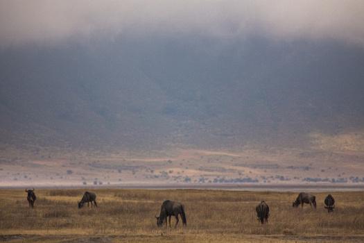 Africa 2014  1809