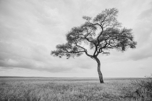 Africa 2014  0696
