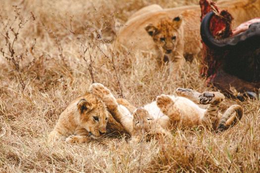 Africa 2014  1792