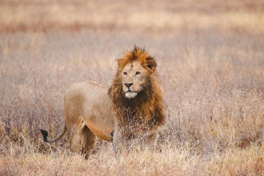 Africa 2014  1281