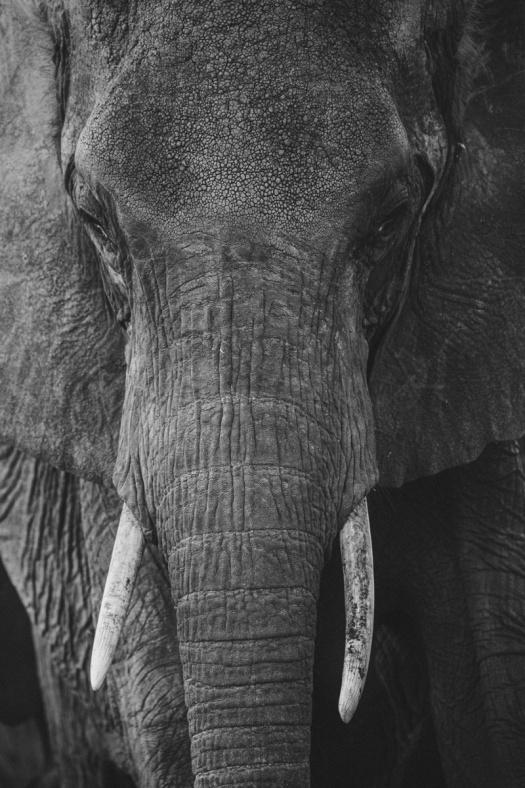 Africa 2014  0640
