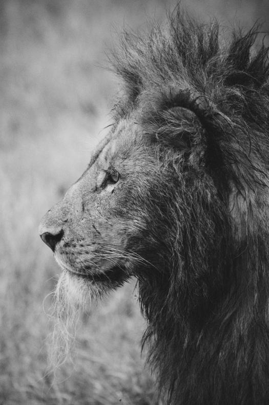 Africa 2014  1501