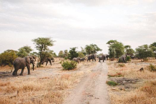 Africa 2014  0927