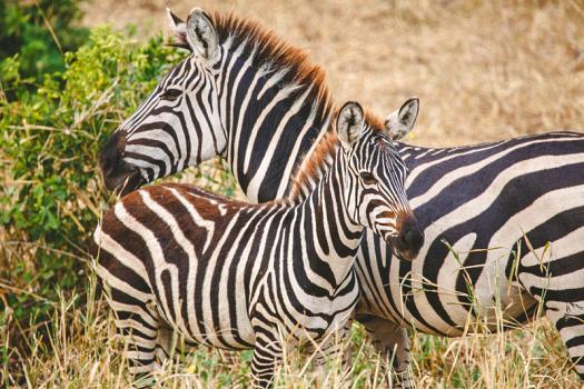 Africa 2014  0860