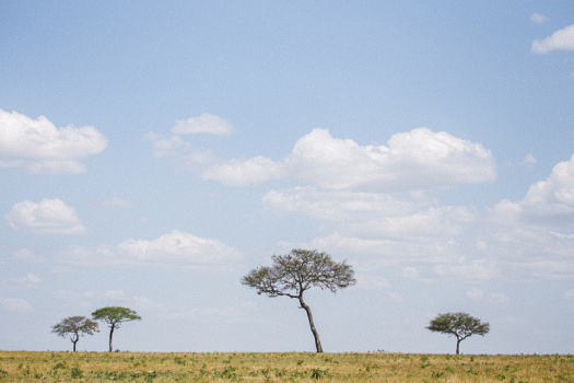 Africa 2014  2445