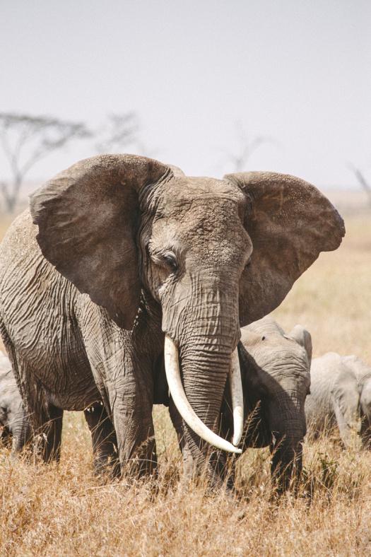 Africa 2014  2084