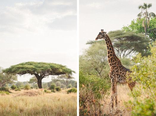Africa 2014  0809