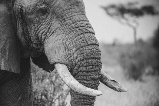 Africa 2014  0454