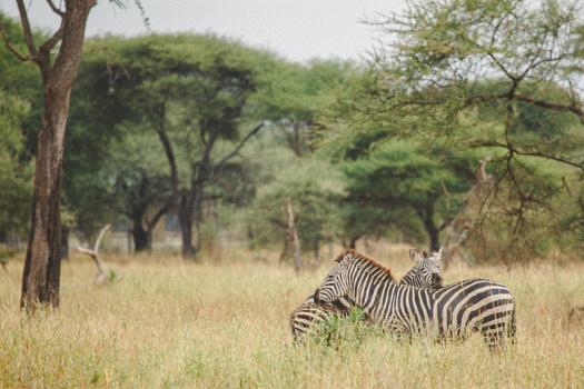 Africa 2014  0162