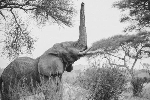 Africa 2014  0459